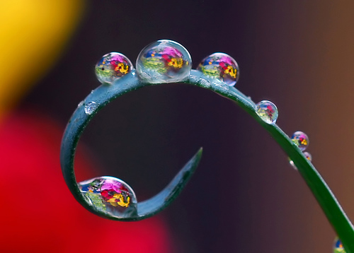 Plant tendril with water drops reflecting background colours