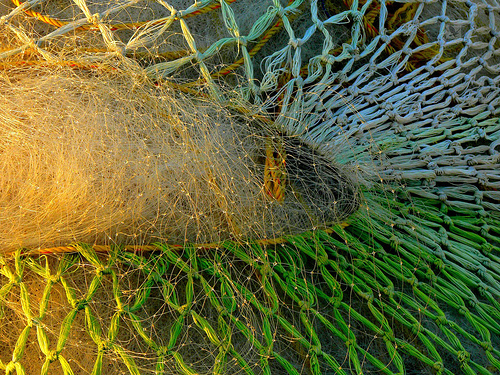 Threads of a fisherman's net