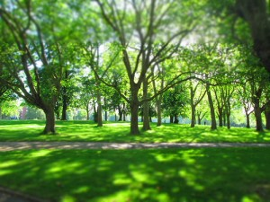 Trees in a park on a sunny day